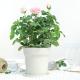 Xiaomi Flora Smart Flower Pot, una buena opción para cuidar plantas